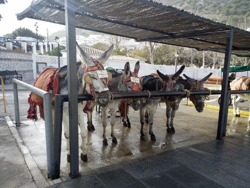 Donkey taxi station