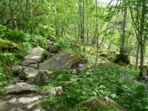 Stony hiking path